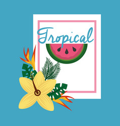 tropical fruit flower vector image