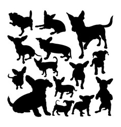 chiweenie dog animal silhouettes vector image