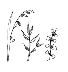 herbal drawing isolated liner vector image