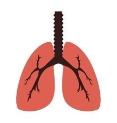 Lung organ human vector