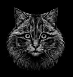 monochrome hand-drawn portrait a cat vector image