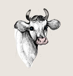 portrait of a cow pastel color hand drawn vector image