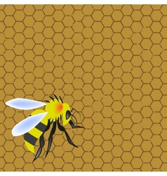 Sweet honeycomb and wasp stinging vector