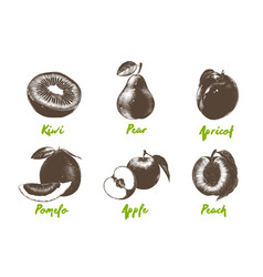 Engraved style organic fruits collection vector
