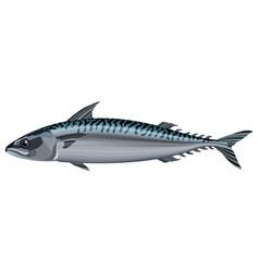 Mackerel fish on white background vector