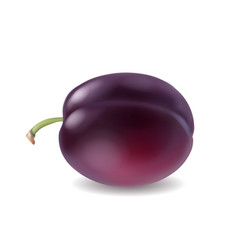 ripe plum isolated realistic 3d vector image