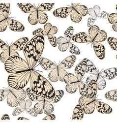 Seamless pattern with vintage white butterfly vector image vector image