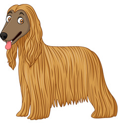 Afghan hound dog vector