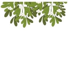 Christmas upper edge mistletoe with white flowers vector