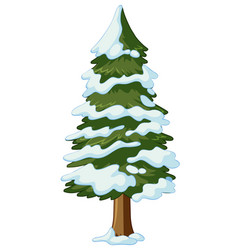 Pine tree covered with snow vector
