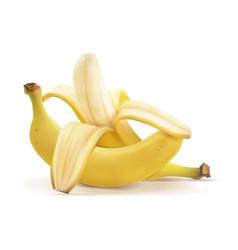 Realistic bananas peeled b vector