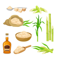 Sugarcane plant and manufactured from it products vector
