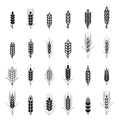 Wheat ear symbols for logo design vector image