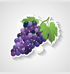 grapes sticker cartoon vector image