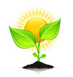 new plant growth vector image