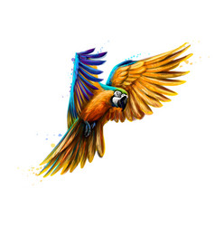 portrait blue-and-yellow macaw in flight from a vector image