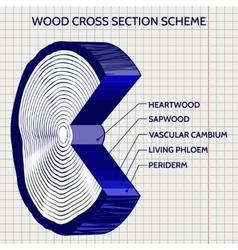 sketch wood cross section scheme vector image