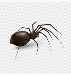 Spider isolated on a transparent background vector