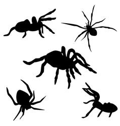 SpiderSet vector image vector image