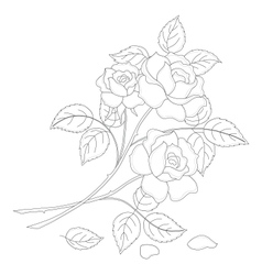 flowers rose contour vector image