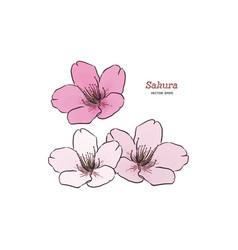sakura flower hand draw sketch vector image