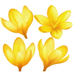 set yellow crocuses vector image