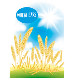 wheat field with the blue sky and the sun vector image