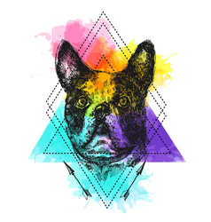 hand drawn bulldog sketch vector image vector image