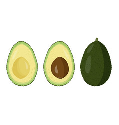 Fresh avocado raw fruit cutted vector