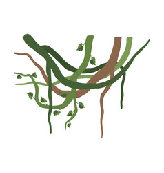 green liana branches with leaves jungle plant vector image