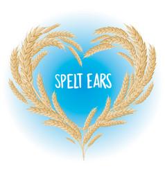 spelt ears heart isolated vector image