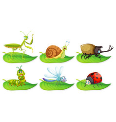 different types of bugs on green leaves vector image vector image