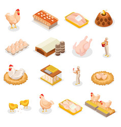 Isometric chicken icon set vector