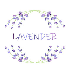 lavender flower round frame on white vector image