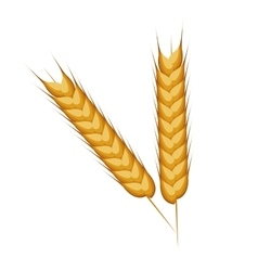 wheat ears barley design isolated vector image