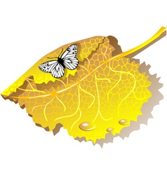 autumn leaves and butterfly vector image