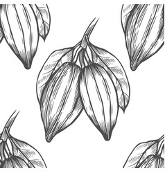 cocoa tree vector image