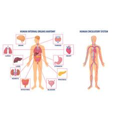 diagrams showing anatomy human body vector image