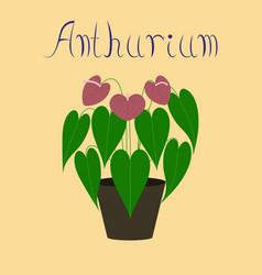 Flat on background plant anthurium vector