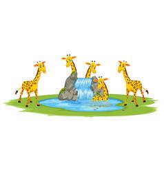 Giraffe at the water vector