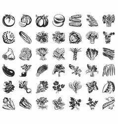 set of icons of vegetables black vector image