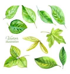 Set spring leaves watercolor vector