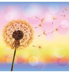 Dandelion on background of sunset vector