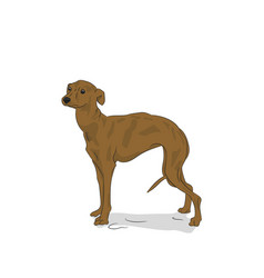 dog in the room vector image