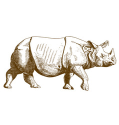 engraving drawing of rhino vector image