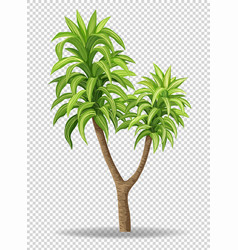 green tree on transparent background vector image