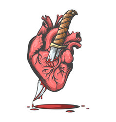 heart pierced by knife vector image