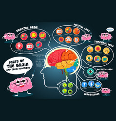 Infographic parts and functions of brain vector