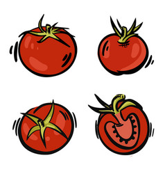 set hand-drawn tomatoes fresh red tomatoes in vector image