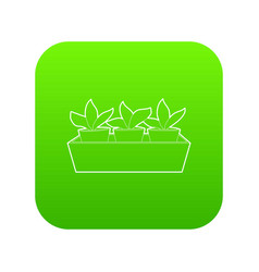 young sprout seedlings in a flower box icon green vector image